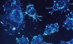 Израильские ученые пообещали лекарство против рака через год. Эксперты настроены скептически