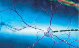 Ученые разработали систему самонаведения для стволовых клеток