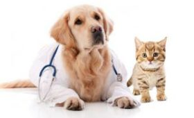 Какой должна быть хорошая ветеринарная клиника