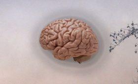 Ученые обнаружили какие изменения в мозге вызывает загрязненный воздух