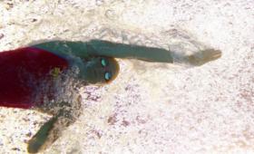 12-летняя пловчиха стала чемпионкой Китая иможет выступить наОлимпиаде