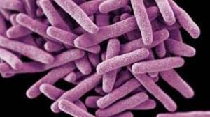 Ученые создают каталог генотипов людей