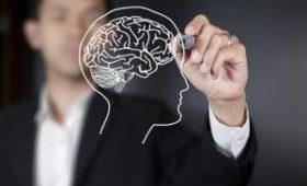 Вчені відкрили гормон, що прискорює роботу мозку