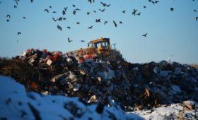 Минприроды потребовало не допустить банкротств мусорных операторов