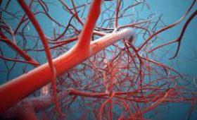 Ученые рассказали, что может защитить сосуды от атеросклероза