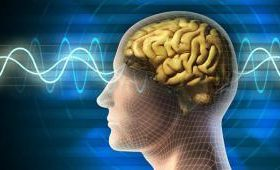 Ученые смогли впервые считать воспоминания после смерти