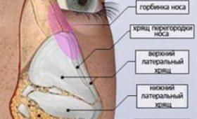 Назван радикальный способ избавления от постоянной забитости носа
