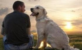 Ученые нашли причину повышенной тревожности собак