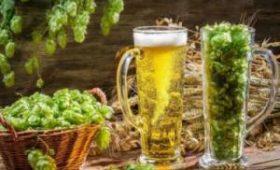 Ученые нашли в пиве полезные вещества из хмеля
