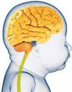Ученые узнали, у каких детей меньше мозг