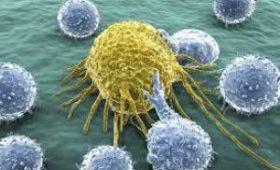Найдены клетки, которые помогают выживать раку — медики